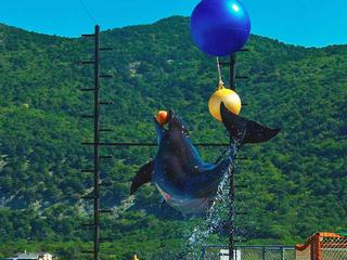 Дельфинарий вУтрише