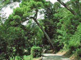 Мисхорский парк