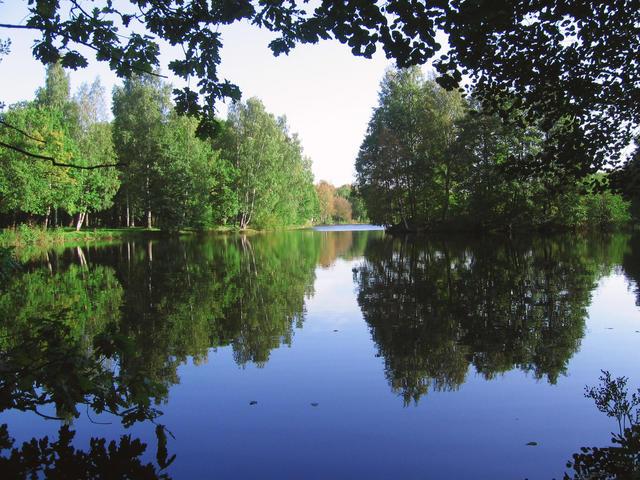 Парк Дубки вСестрорецке