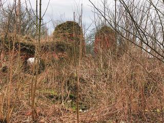 Руины замка Фишхаузен