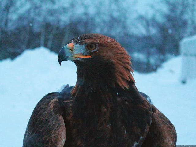 Центр соколиной охоты вЛысково